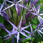 Jardins Sickla 1